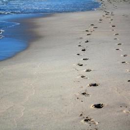 Follow me Flip Flops: Die ganz besondere Spur am Strand hinterlassen