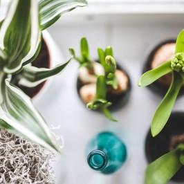Cleverer Blumentopf: Pflanzen in der Wohnung sind ein muss und jetzt auch für Pflanzenmuffel kein Problem mehr