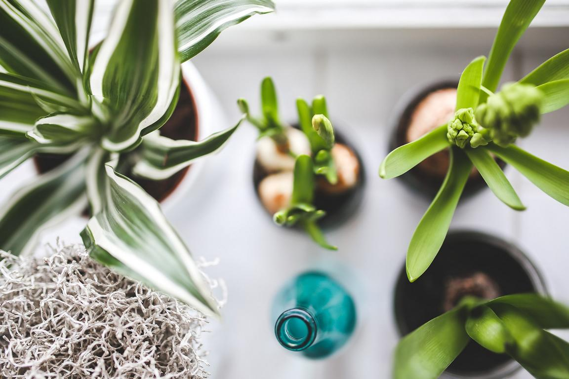 Pflanzen sind ein muss für jede Wohnung - ohphoria.de