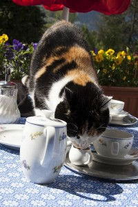 Die Katze als Barista - kuriose Geschenkideen auf ohphoria.de