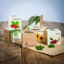ECOCUBE: Dieser kleine Holzwürfel macht das Züchten eigener Pflanzen & Kräuter kinderleicht