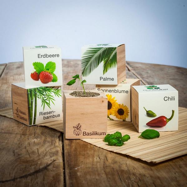 Ecocube bietet mittlerweile eine große Auswahl an verschiedenen Pflanzen und Kräutern