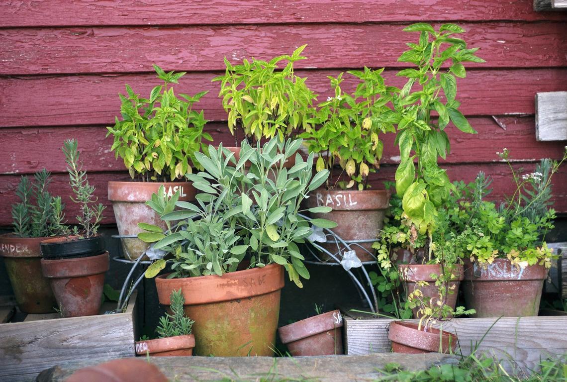 Egal ob Kräutergarten oder Sonnenblumen für die Wohnung - Ecocube macht es kinderleicht Pflanzen zu züchten