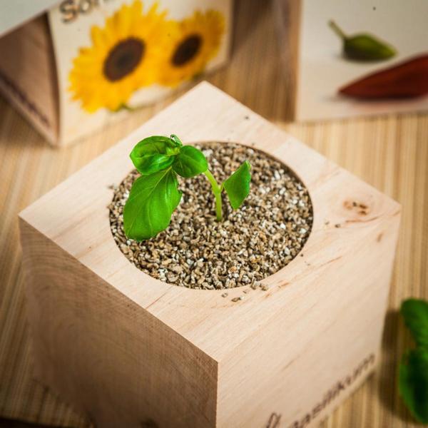 Gießen, Warten, Fertig - so einfach ist züchten mit dem Ecocube